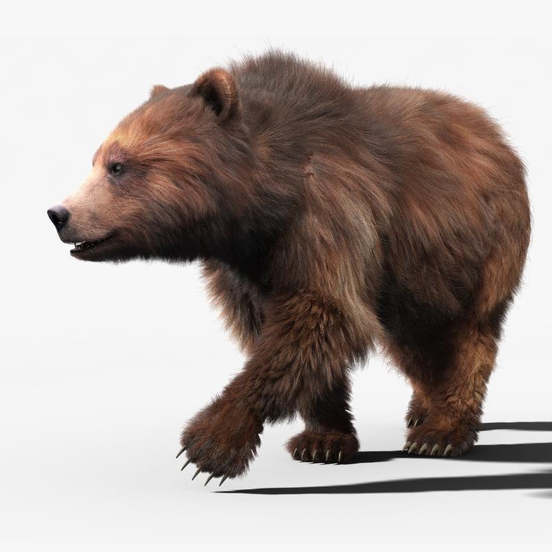 brown bear 2 fur 3d model