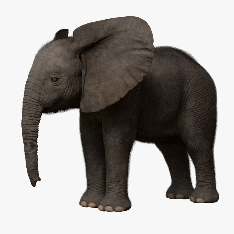 3d model african elephant baby rigged