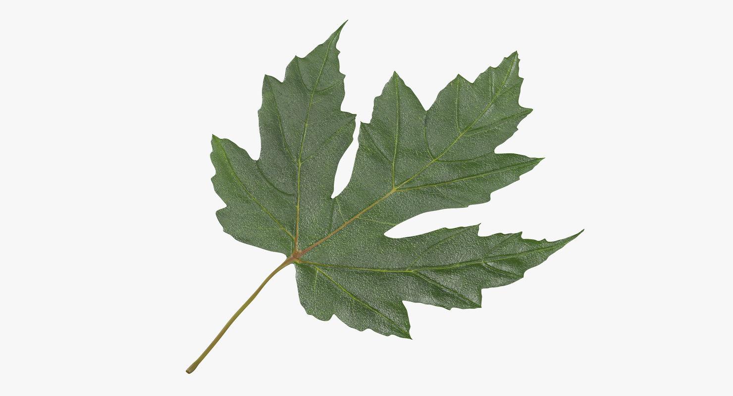 green maple leaf 01 3d max