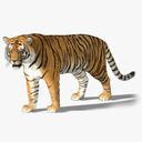 tiger rigged fur 3d ma