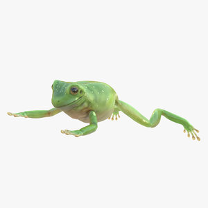 3ds max australian green tree frog
