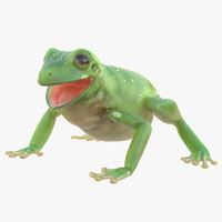 Australian Green Tree Frog Pose 4 3D Model