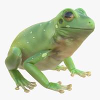 3d model australian green tree frog