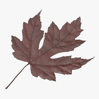 brown maple leaf 3d max
