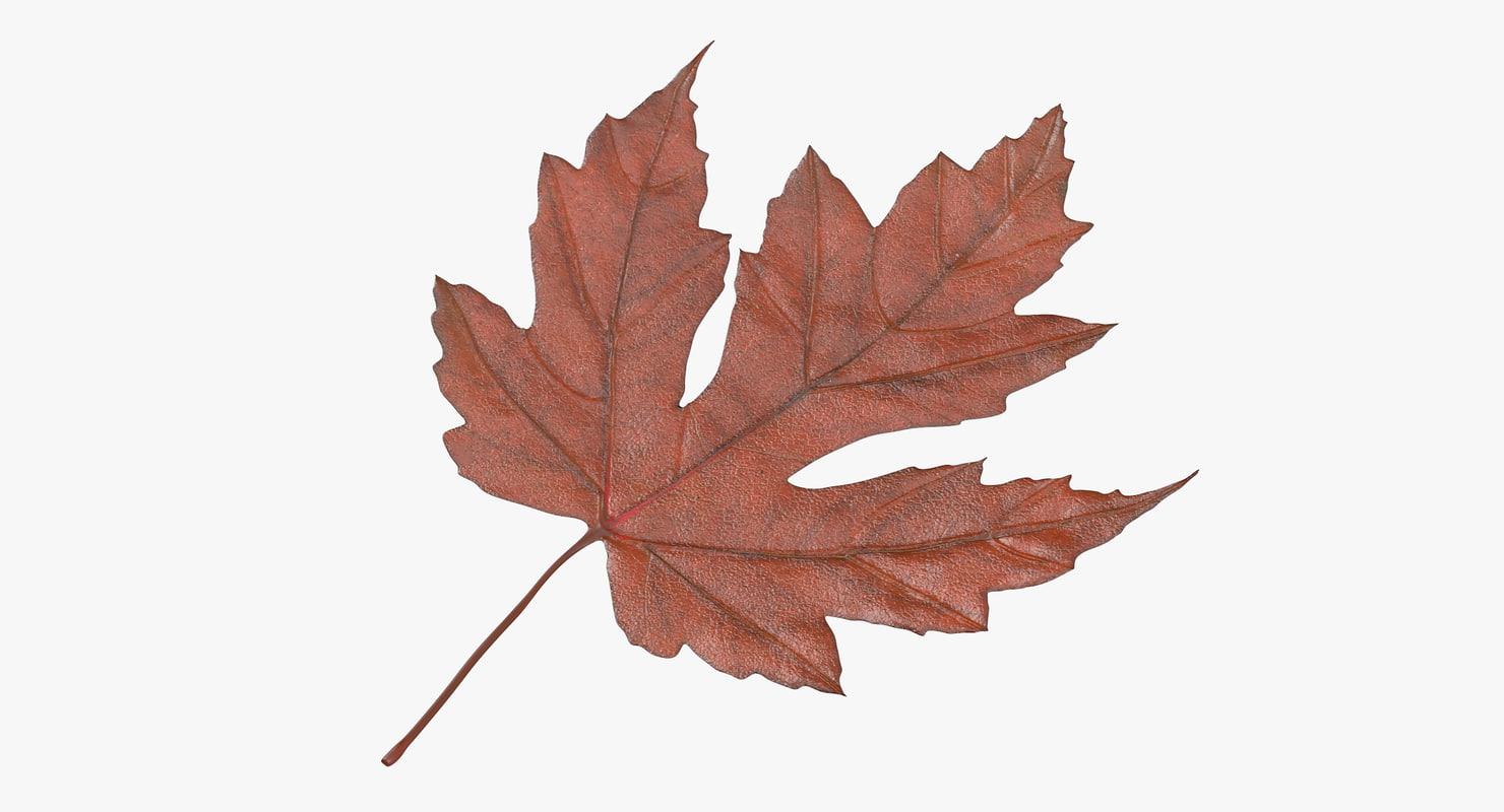3d orange maple leaf model