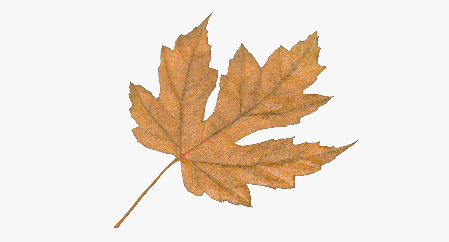 3d yellow maple leaf