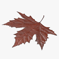 brown maple leaf 02 3d max