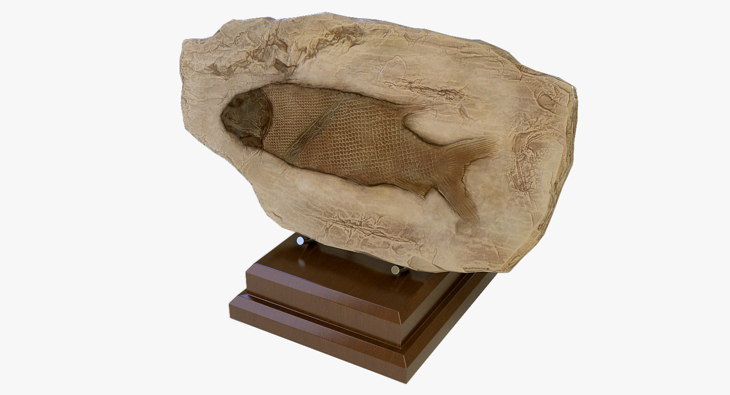fossilized fish 3ds