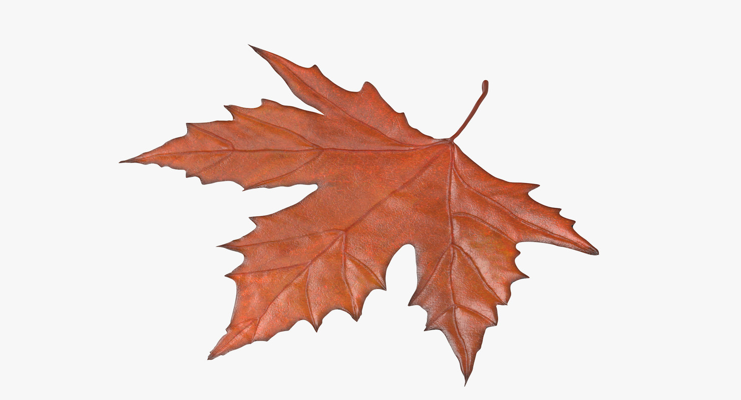 orange maple leaf 3d model
