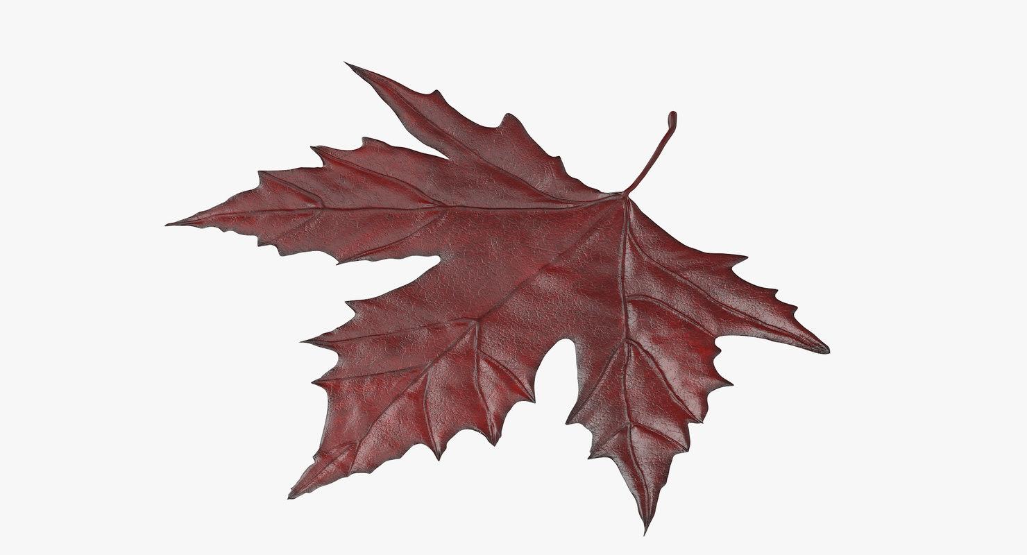red maple leaf 3d c4d