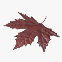 red maple leaf 3d c4d