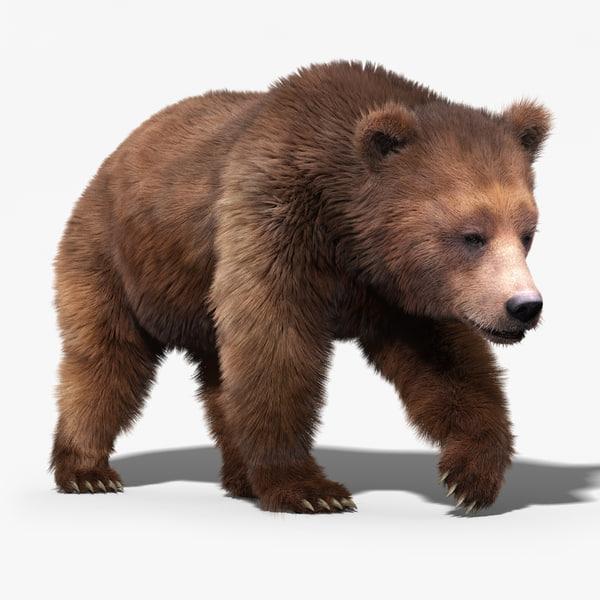 brown bear 3 fur 3d model