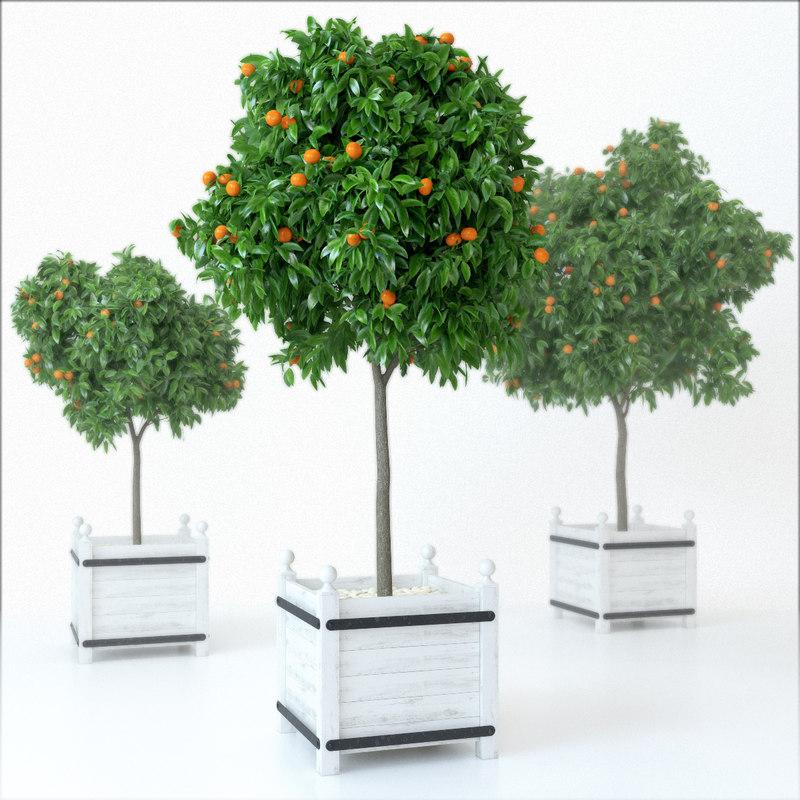 realistic mandarine tree plant 3d obj