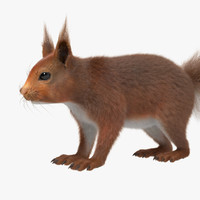 3d squirrel red fur model