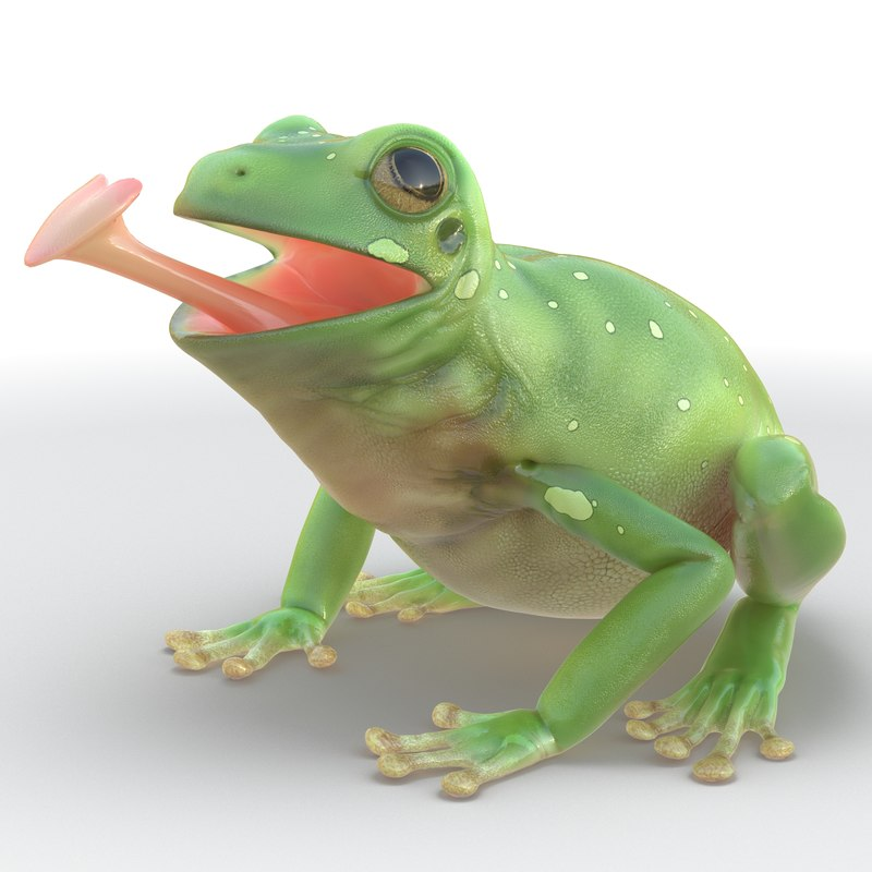 3ds max australian green tree frog
