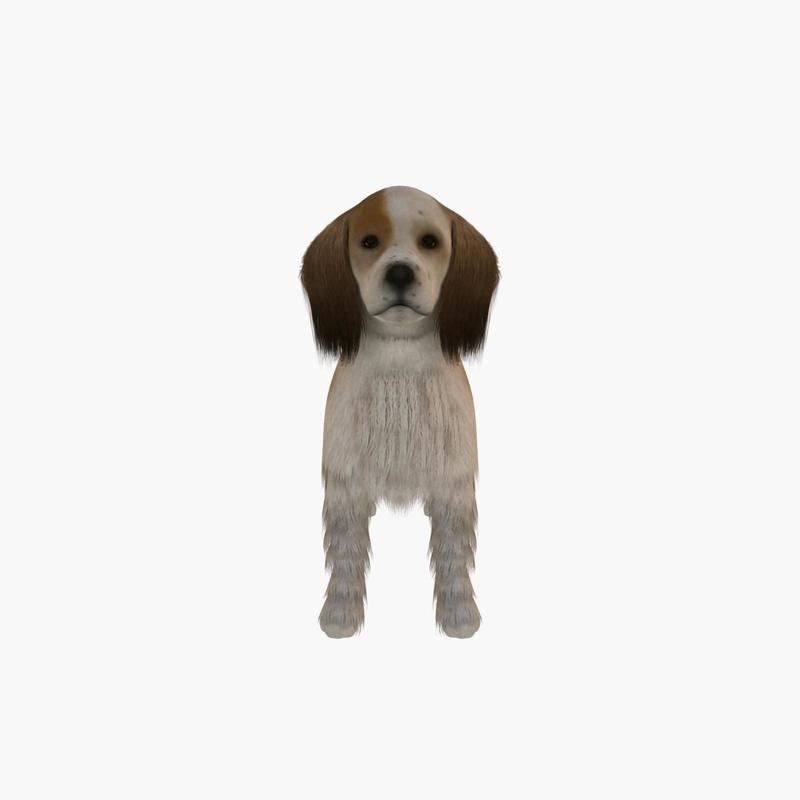 small dog cocker 3d model