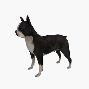 boston terrier dog 3d max