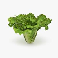 lettuce food max