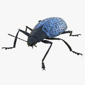 3d gibbifer californicus beetle rigged