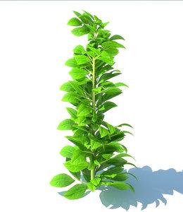 3d model bay tree plant