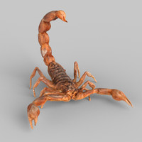 3d model scorpion scanned