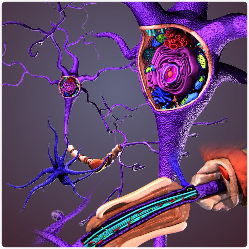 neuron cell structure 3d x
