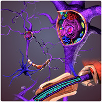 neuron cell structure 3d x