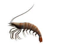 sea animal 3d model