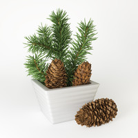 3d model christmas fir branches cones