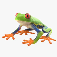 Red Eyed Tree Frog Pose 4