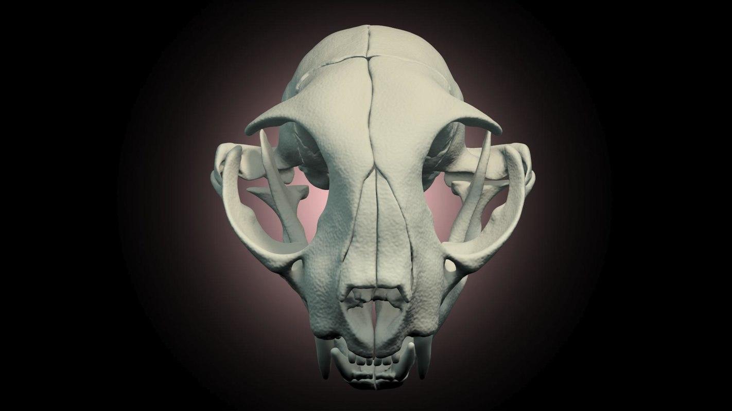 cat skull scanned 3d model
