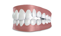 Human False Teeth Set