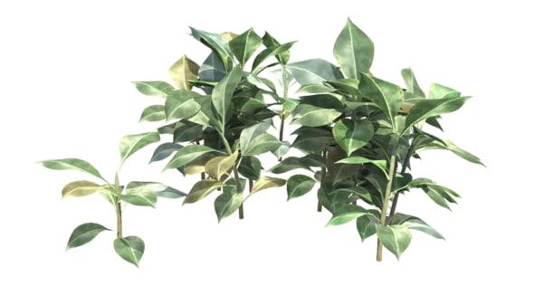 plant realistic 3d fbx