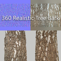 3d model 360 tree bark