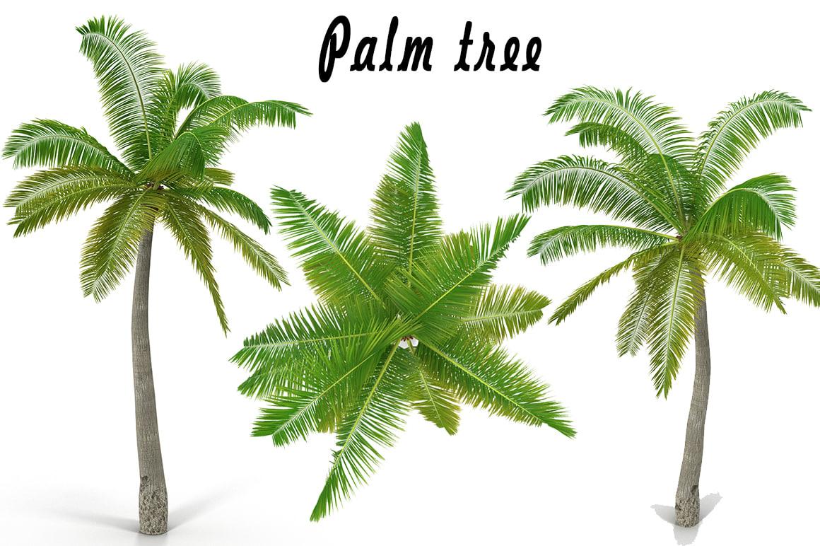 3d coconut palm