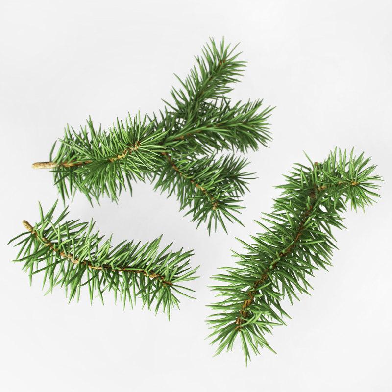 fir branches 3d model