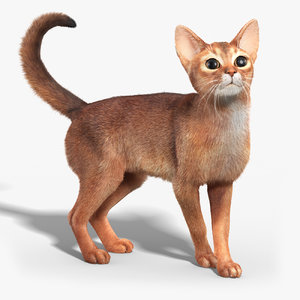 3d model abyssinian cat fur rigged