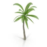 coconut tree 3d model