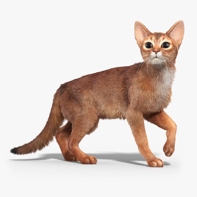 3d model abyssinian cat 2 fur