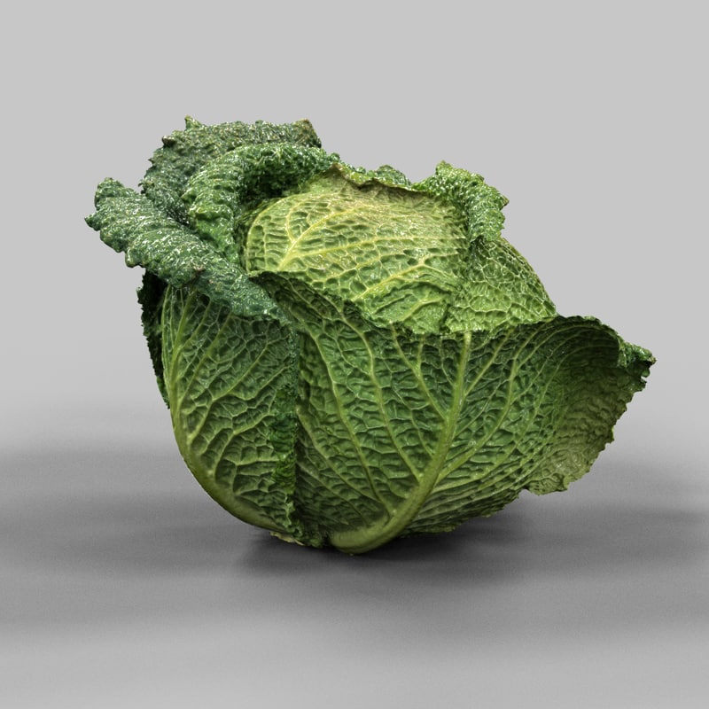 3d model savoy cabbage