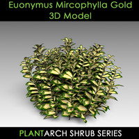 3d model euonymus gold