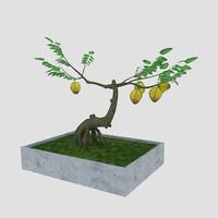 bonsai starfruit