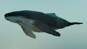 3d model humpback whale