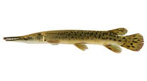 3d aligator gar