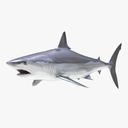 mako shark 3D models