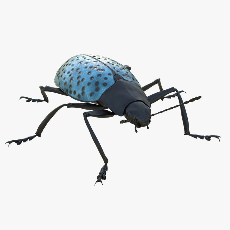 3ds gibbifer californicus beetle 2