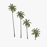 Coconut palm tree 01 - Low Poly