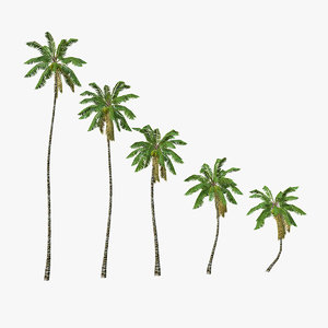 3d c4d coconut palm trees
