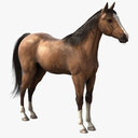 thoroughbred 3D models