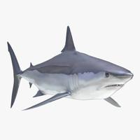 Shortfin Mako Shark 2